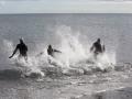 p2m_2014_freiwasserschwimmen_1024_35