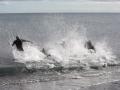p2m_2014_freiwasserschwimmen_1024_36