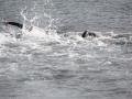 p2m_2014_freiwasserschwimmen_1024_40